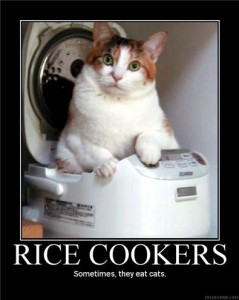 6262008103157AM_cat_in_rice_cooker